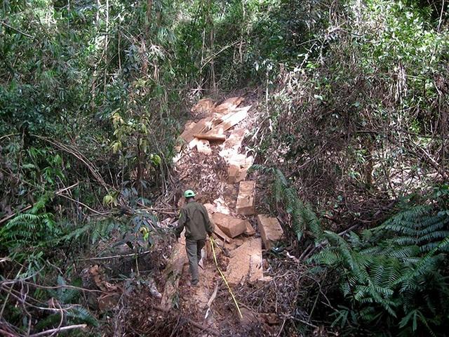Hiện trường vụ khai thác gỗ lậu