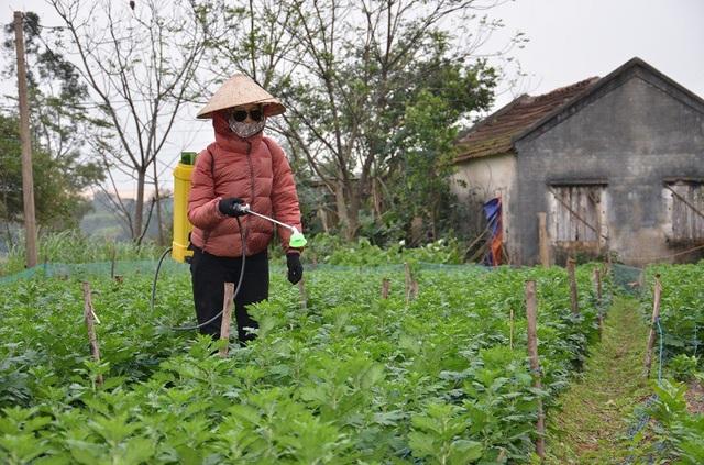 Chị Nguyễn Thị Hòa cho biết, vì thời tiết rét nên hoa bị nhiễm bệnh nhiều khiến bà con rất vất vả. Cứ 3 đến 5 ngày lại phải phun thuốc một lần.