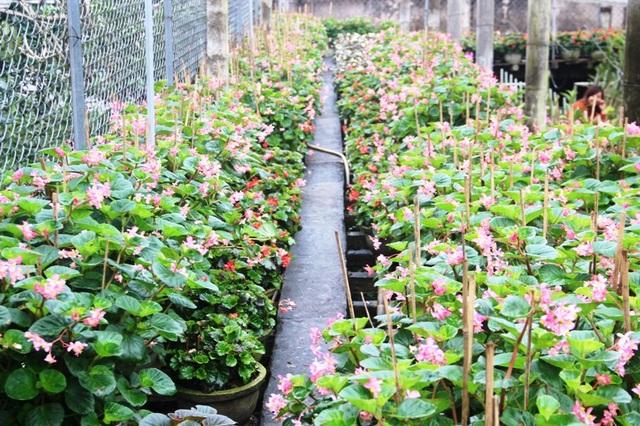 Vườn hoa An Lạc là nơi cung cấp hoa lớn nhất tỉnh Quảng Trị
