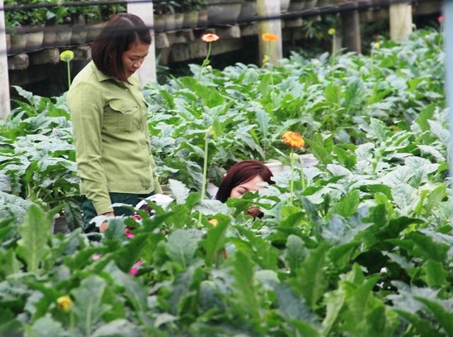 Làng hoa lâu đời nhất Quảng Trị tất bật chuẩn bị hoa Tết - 7