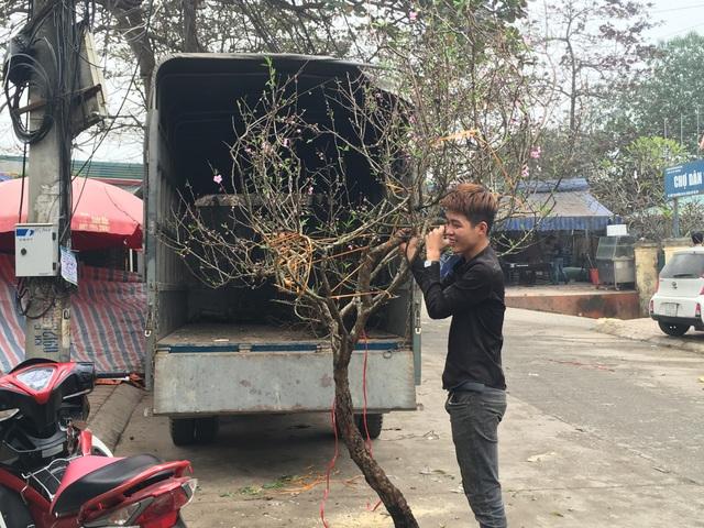 """Không đợi đến Tết, người Hà Nội """"đua nhau"""" chơi đào sớm - 3"""