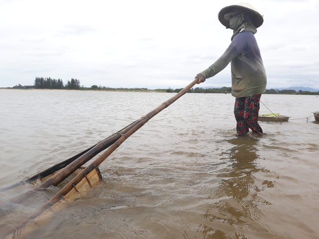 Nghề nhủi hến tuy cực nhọc nhưng là kế sinh nhai của hàng trăm người dân vùng cửa sông Trà Khúc