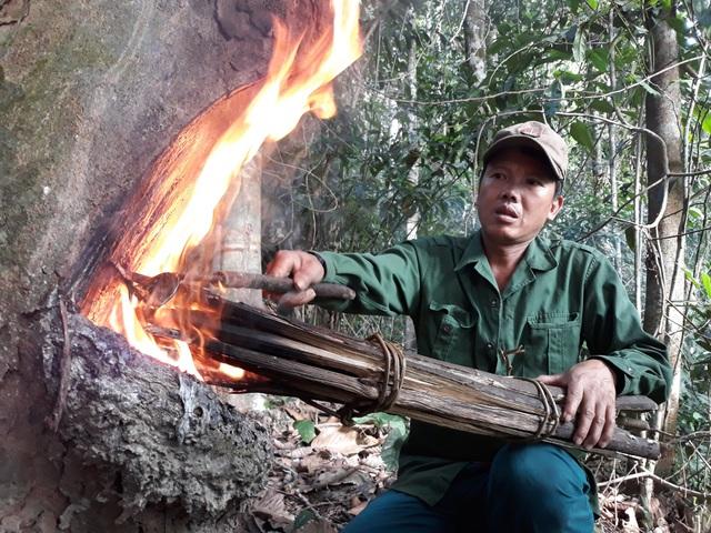 Dùng rìu chặt vào thân cây và dùng lửa đốt để kích thích cây tiết ra nhựa