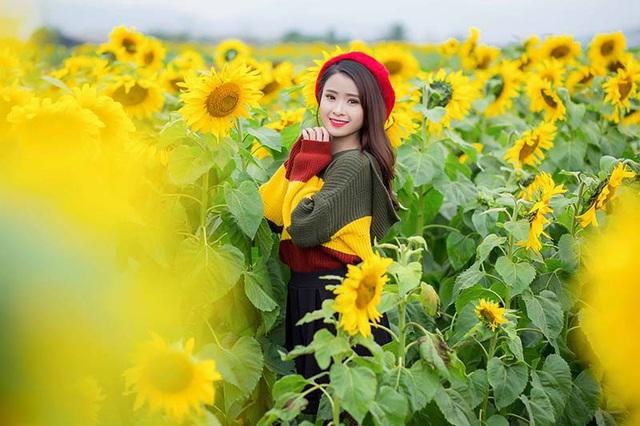"""Nữ sinh xứ Nghệ """"gây thương nhớ"""" với bộ ảnh ở cánh đồng hoa hướng dương - 11"""