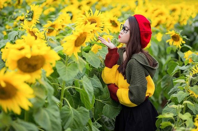 Đồng hoa bạt ngàn ở Nghệ An đã nở rộ với sắc hoa tươi thắm, đây cũng là một điểm đến lý tưởng sau quãng thời gian làm việc, học tập.