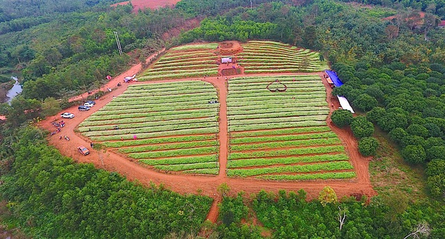 Vườn hoa tam giác mạch nằm trên mảnh đất Nghĩa Đàn, tỉnh Nghệ An. Du khách từ TP Vinh sẽ di chuyển quãng đường khoảng 150km, từ Thanh Hóa di chuyển theo đường Hồ Chí Minh cũng mất tầm 80-120km...sẽ đến được vườn hoa này.