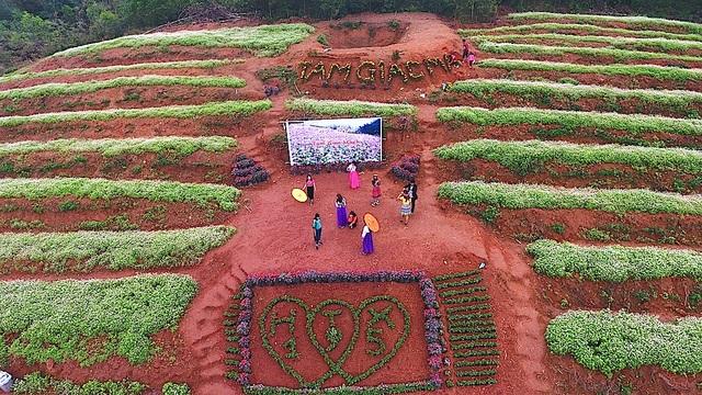Chiêm ngưỡng vườn hoa Tam giác mạch đầu tiên ở xứ Nghệ - 7