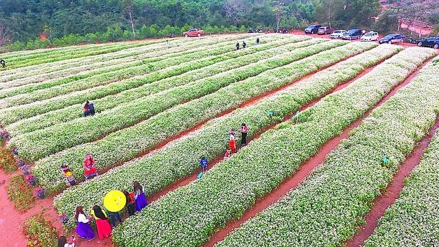 Chiêm ngưỡng vườn hoa Tam giác mạch đầu tiên ở xứ Nghệ - 3