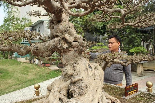 Được biết, để sở hữu siêu cây giá trị này, anh Dưỡng phải chi không dưới 8 tỷ VNĐ