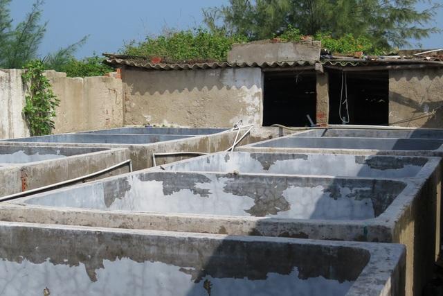 Nhiều hồ nuôi tôm được phường Điện Dương cho thuê đất nhưng vẫn nhận tiền đền bù rất cao