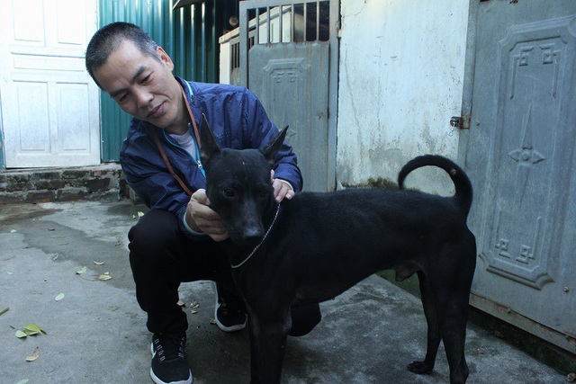 Chủ trang trại này cho biết, nuôi chó Phú Quốc ngoài đam mê phải có sự hiểu biết để bảo tồn được đặc tính, bản năng của giống chó này.