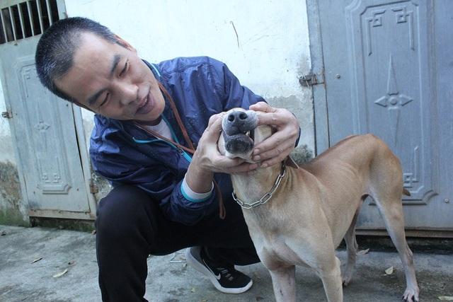 Hiện tại, trang trại anh Thắng nuôi khoảng 60 chó Phú Quốc trị giá lên tới hàng tỷ đồng.