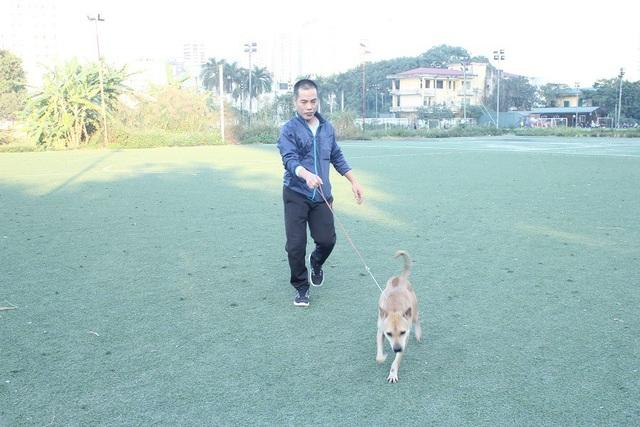 So với các giống chó khác, chó Phú Quốc săn mồi giỏi, rất tinh anh và nhanh nhẹn.
