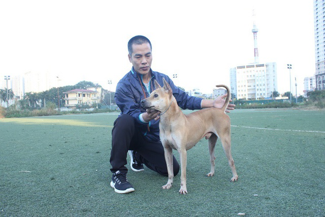 Theo anh Thắng, một con chó Phú Quốc đạt chuẩn có nhiều tiêu chí, trong đó dáng thon cao, tai đứng, đuôi cong, lưỡi đốm...