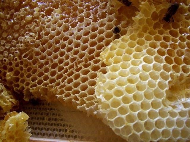 Hình ảnh những lỗ nhỏ trong tổ ong có thể khiến nhiều người thấy ác cảm.