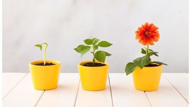 Các loài thực vật có hoa chinh phục thế giới bằng cách nào? - 1