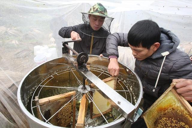 Người nuôi ong ở cao nguyên đá thường xuyên phải sống tạm bợ bên những tổ ong để theo dõi việc lấy mật và một phần để bảo vệ tổ. Thời điểm thu hoạch mật luôn mang lại không khí hào hứng.