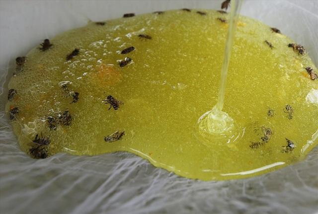 Mùa thu hoạch mật ong trên cao nguyên đá Hà Giang - 11