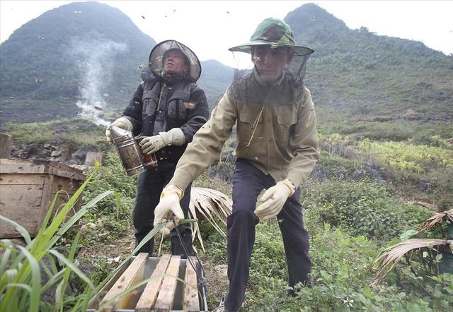"""""""Người nuôi ong hầu hết là dân bản địa, nuôi ong bản địa. Trong năm có hai tháng 6-7 là không có hoa nên phải dùng đường nuôi giữ ong. Theo từng mùa hoa, hằng năm gia đình vẫn di chuyển các đàn ong đến vùng có hoa để thu hoạch mật"""" - Má Văn Phú ở tổ 1 Đồng Văn nói."""