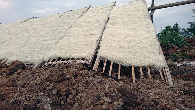 Gần Tết Nguyên đán, hàng nghìn hộ dân ở Dương Liễu, Minh Khai tất bật vào vụ sản xuất lớn nhất trong năm. Sản lượng miến tăng cao bao nhiêu thì khâu phơi miến lại không đảm bảo vệ sinh bấy nhiêu. Nhiều bãi đất bẩn được trưng dụng thành nơi phơi miến.