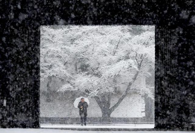 Theo AFP, tuyết bắt đầu rơi nhiều vào buổi sáng và cho tới 21h tối qua 22/1, một số khu vực ở trung tâm thủ đô Tokyo ngập trong lớp tuyết dày tới 20 cm. Đây là trận bão tuyết mạnh nhất kể từ năm 2014 đến nay tại Tokyo.