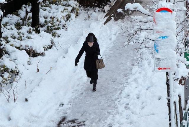 Hơn 60 người đã bị thương do trận bão tuyết kỷ lục tại Tokyo trong khi số vụ tai nạn giao thông lên tới con số hàng trăm. Khoảng 15.110 hành khách đã bị ảnh hưởng do các chuyến bay bị hoãn tại sân bay Haneda.