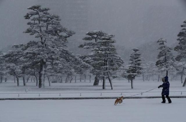 Đài truyền hình Nhật Bản đã phát cảnh báo, khuyên người dân đi giày, mặc quần áo ấm, về nhà sớm và chú ý khi di chuyển do mặt đường trơn trượt.