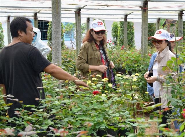 Và khi cần, ông chủ vườn sẵn sàng giải đáp mọi câu hỏi về tên gọi, xuất xứ... của từng loài hoa hồng (Ảnh: Lục Tùng)