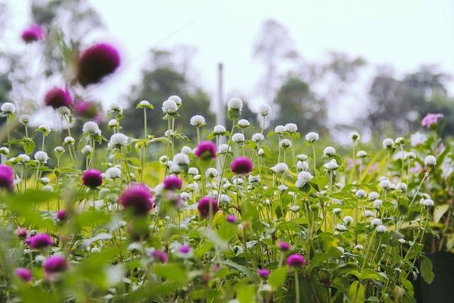 Không thể tin nổi giữa Sài Gòn có cánh đồng hoa đẹp đến thế! - 6