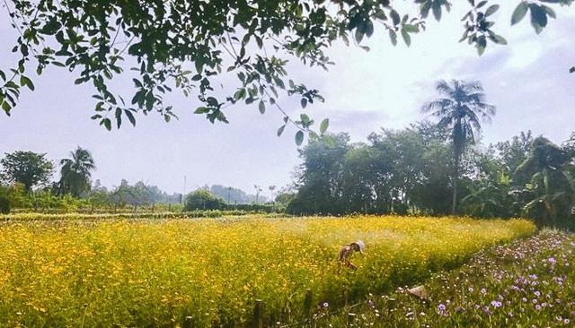 Không thể tin nổi giữa Sài Gòn có cánh đồng hoa đẹp đến thế! - 1