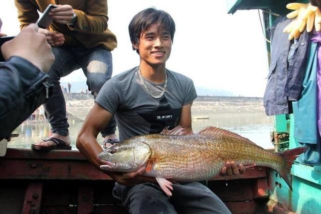 Ba lô 1,5 tỷ đồng mua con cá sủ vàng: Huyền thoại lộc trời - 4