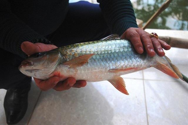 Kỳ thú 'cá thần' bên dòng sông Chảy - 4