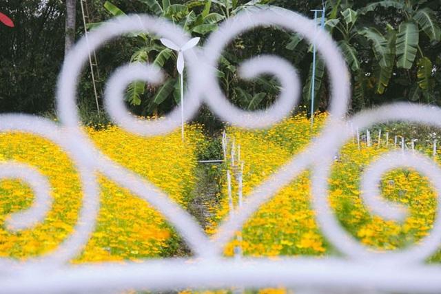 Không thể tin nổi giữa Sài Gòn có cánh đồng hoa đẹp đến thế! - 15