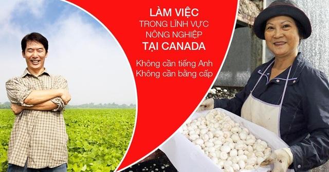 Cơ hội làm việc tại Canada dành cho du học sinh và người lao động Việt Nam - 9