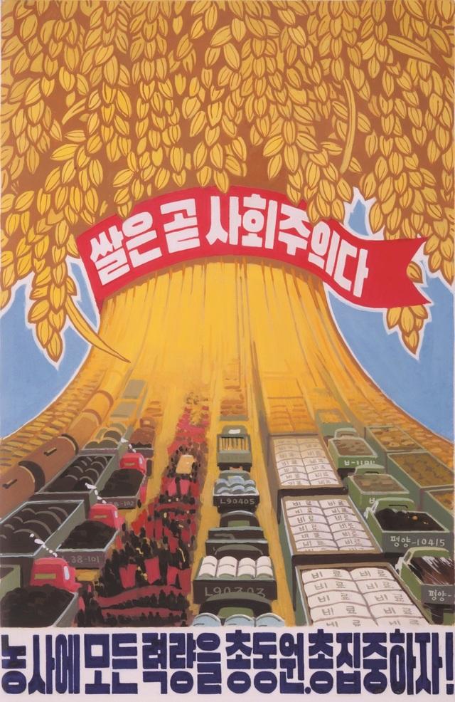 Gạo là chủ nghĩa xã hội. Hãy tập trung mọi nỗ lực để phát triển nông nghiệp! là nội dung câu khẩu hiệu trên áp phích của Triều Tiên (Ảnh: SCMP)