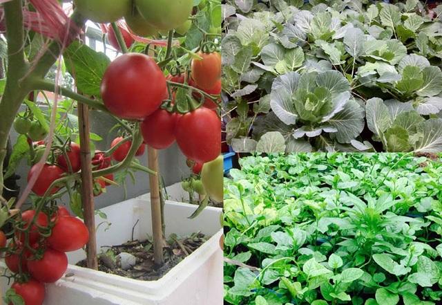 Sân thượng nhà chị Thùy được tận dụng để trồng các loại rau quả sạch