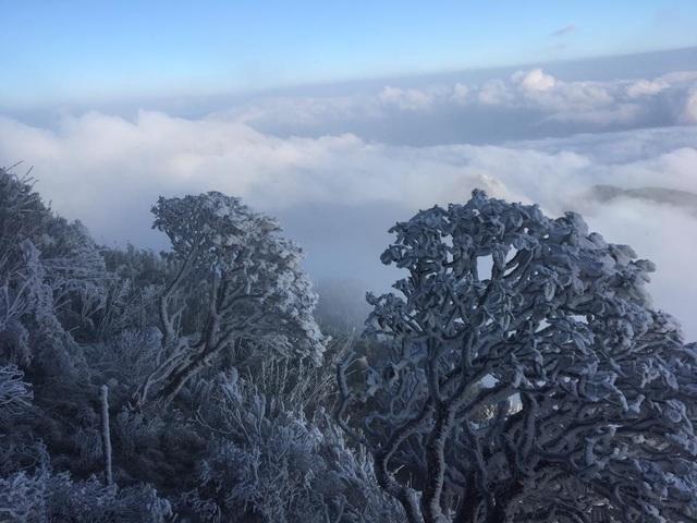 Băng tuyết phủ trắng cây rừng Hoàng Liên - Sa Pa (Ảnh: Vườn quốc gia Hoàng Liên)