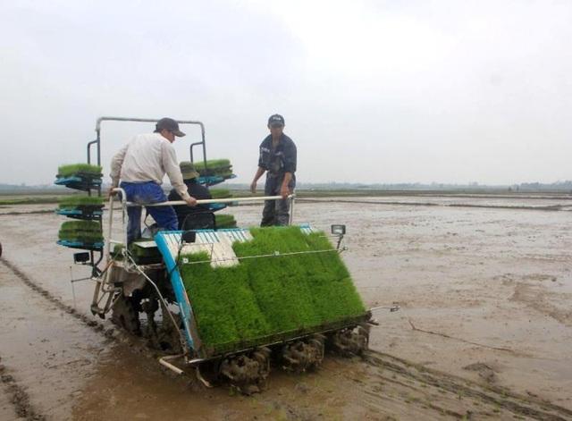 Quảng Trị áp dụng công nghệ mới, cơ giới hóa trong sản xuất nông nghiệp - 3
