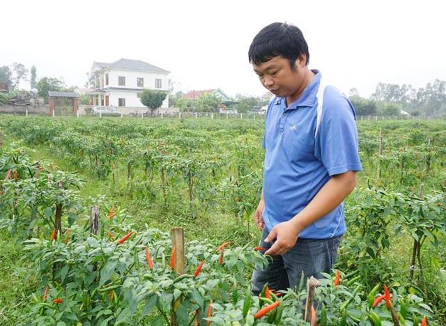 Trồng ớt trái vụ đón Tết, nông dân thu gần 1 triệu đồng mỗi ngày - 3