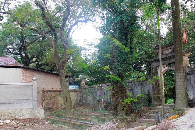 Hà Nội: Chặt hạ cây sưa đỏ 100 năm tuổi bên cạnh cây sưa trăm tỷ