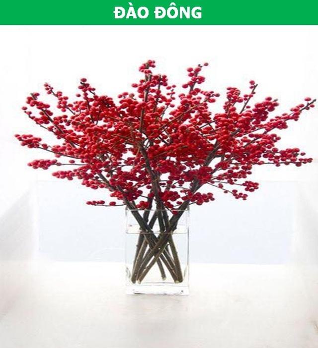 Những loại hoa nhập ngoại được ưa chuộng dịp Tết năm nay - 4