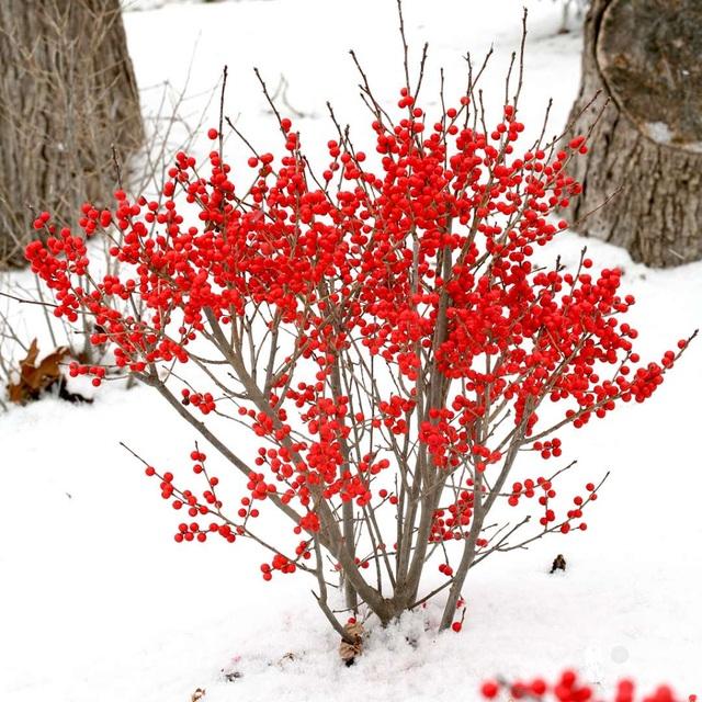 Những loại hoa nhập ngoại được ưa chuộng dịp Tết năm nay - 5