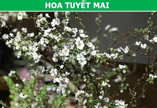 Những loại hoa nhập ngoại được ưa chuộng dịp Tết năm nay - 6