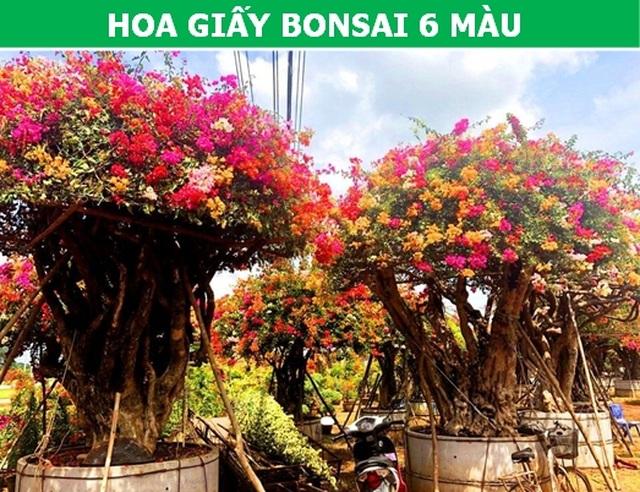 Những loại hoa nhập ngoại được ưa chuộng dịp Tết năm nay - 7