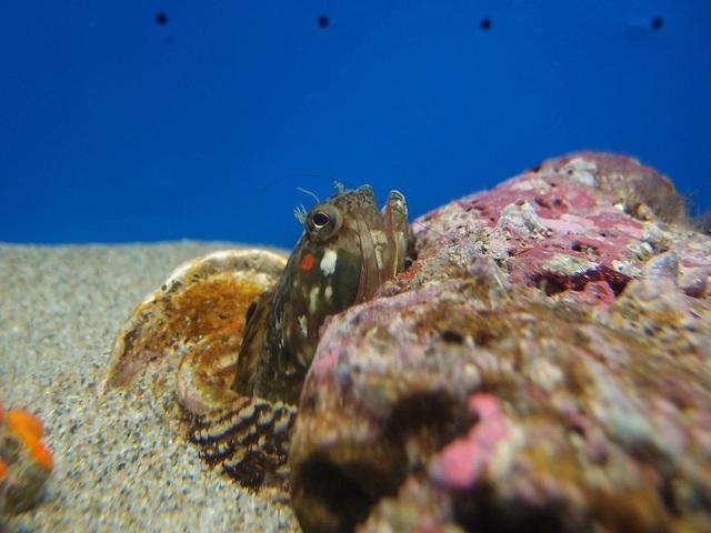 """Cận cảnh loài cá nhỏ bé """"ác mộng"""" dưới đại dương - 2"""