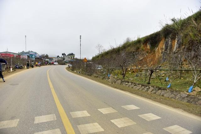 Đào rừng Sơn La bán tràn lan trên quốc lộ 6 chờ về Tết miền xuôi - 1