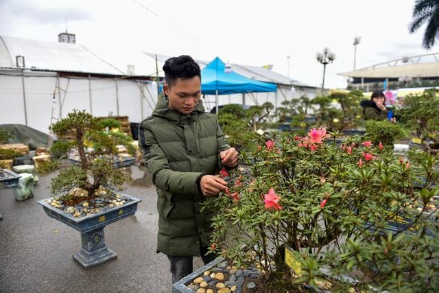 Đỗ quyên bonsai hàng khủng giá gần tỷ đồng chưng Tết ở Hà Nội - 9
