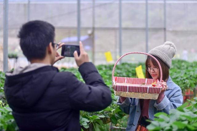 Sống ảo tại vườn dâu tây lớn nhất miền Bắc - 14