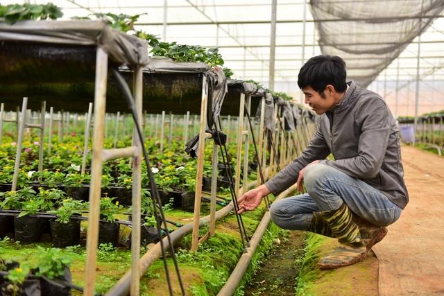 Sống ảo tại vườn dâu tây lớn nhất miền Bắc - 9
