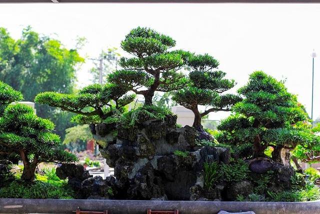 Bonsai cổ thụ dáng cực lạ giá cả trăm triệu ngóng đại gia dịp Tết - 5